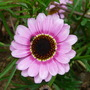 Flowers_2012_027