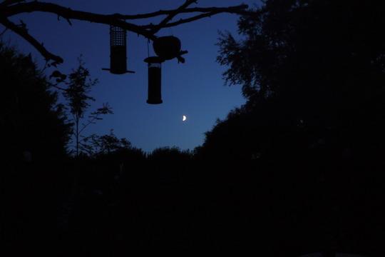 June Moon...