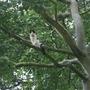 Cat_21062012_014