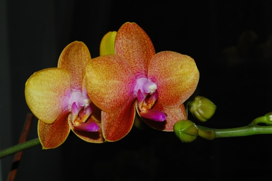 Another Happy Phal!