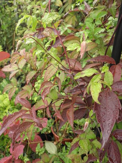 Foliage n buds