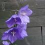 Unknown in garden!