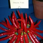"Chilli/Chili/Chile ""Prairie Fire"" at Gardening Scotland 2008 (Capsicum annuum (Longum) (Chilli pepper))"