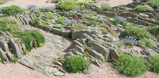 The crevice garden