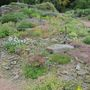 The scree garden