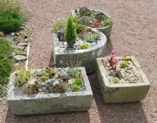 Group of containers planted with alpines