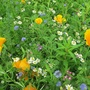 Wild_flowers_at_webbs