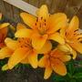 Flowers_2012_003