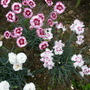 Flowers_2012_007