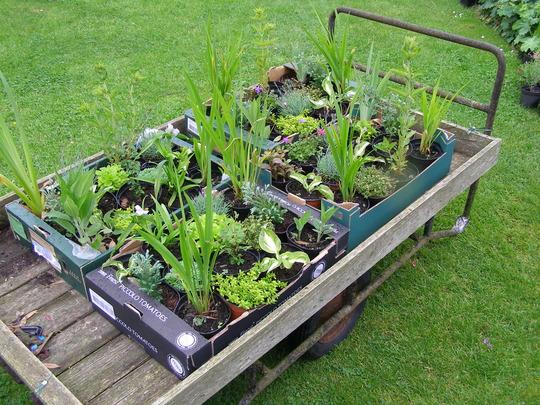 Plants for auction