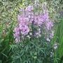 Garden_3064