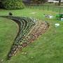 Planting 5700 Crocus Yellow Mammoth, Crocus Purple Mammoth and Iris Riticulata Bulbs