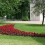 400 Begonia Non Stop Mocha Scarlet