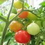 Garden_345