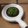 Pot Plant!