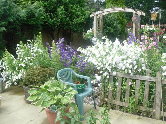 My Garden July 12
