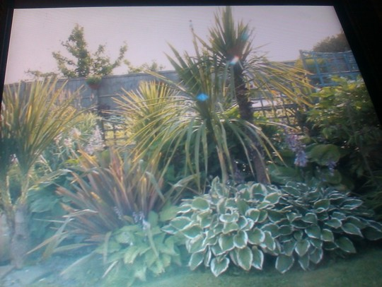 My favourite border, the tropical border 2011