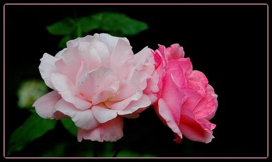 D clinaison rose