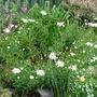 Garden_july_017