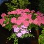 Garden_2nd_july_2012_019