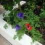Garden_022