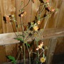 Flowers_2012_007_copy