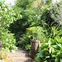 Garden Lush & Green