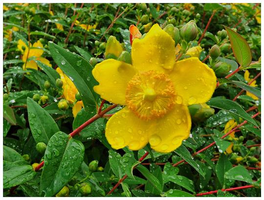 More rain kissed flowers