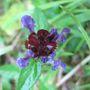 ? Wild flower