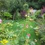 Wet_garden