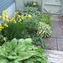 backyard gate and shade garden