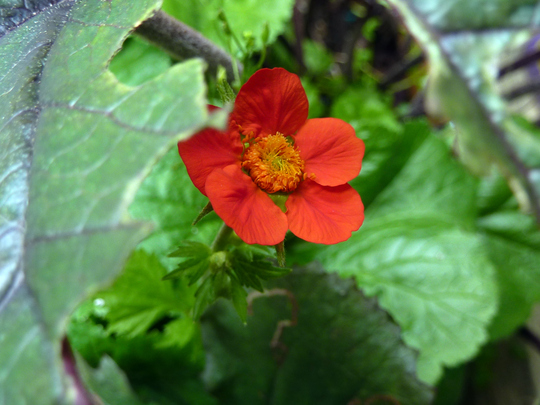 Geum through slug hole.