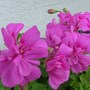 Close_up_flowers_002