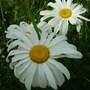 Close_up_flowers_012