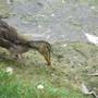 ducking at Stratford