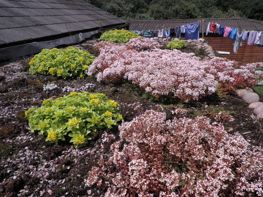 Rockery on the roof