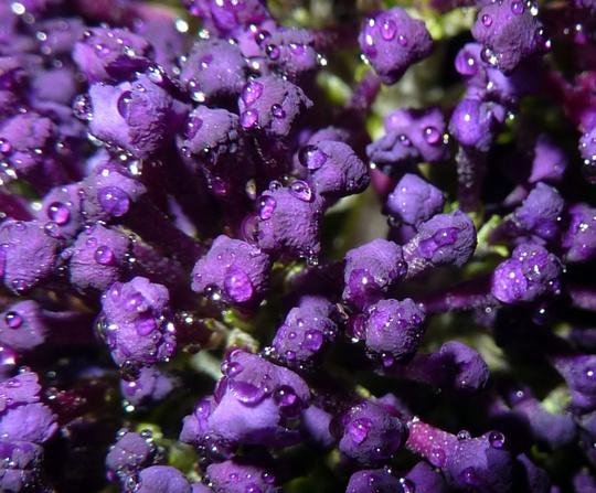 Purple rain, purple rain..