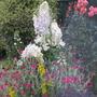 Garden_3074