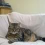 Sitting Comfortable Max