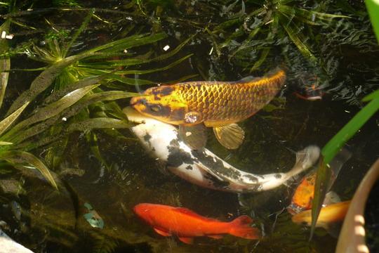 Fish....