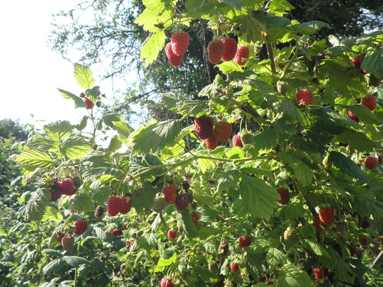 Another raspberrie anyone ; )