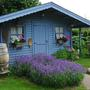 garden shed with lavender   -050712