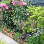 Garden_3082