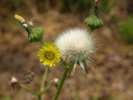 Even the weeds are pretty here :)