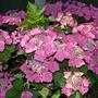 Flowers_2012_004_copy