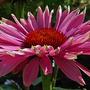Flowers_2012_018_copy4