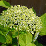 Flowers_2012_024_copy