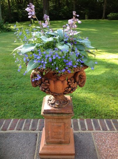 Urn of Hostas