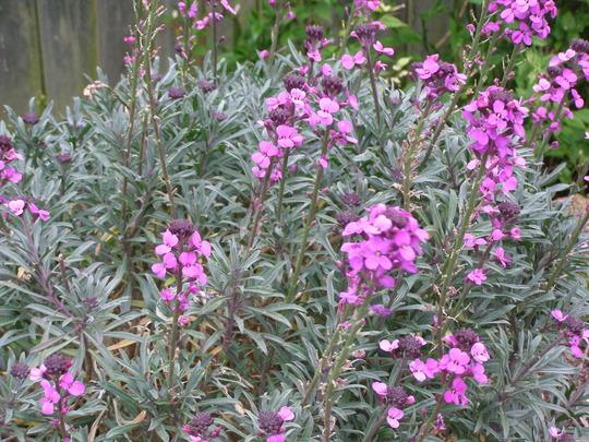 Is this the longest flowering season ever?