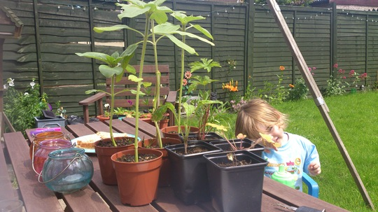 ready to get muddy! (the plants, not alfie) :-)